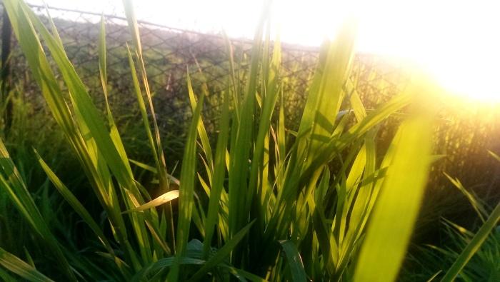soare in iarba
