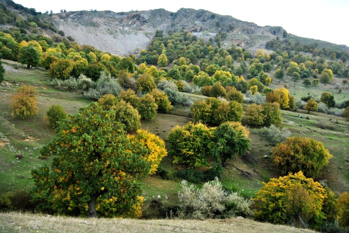 verde de toamna in muntii macinului